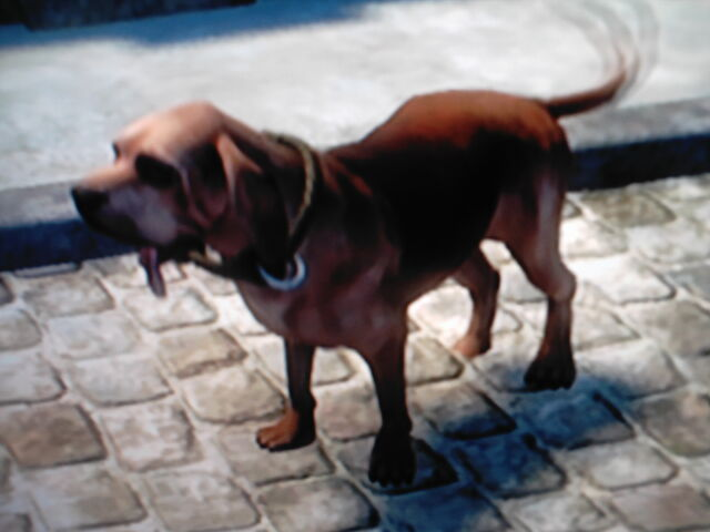 File:Neutralbloodhound.JPG