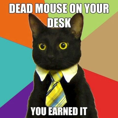File:User cat.jpg