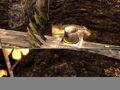 Thumbnail for version as of 23:30, November 29, 2012