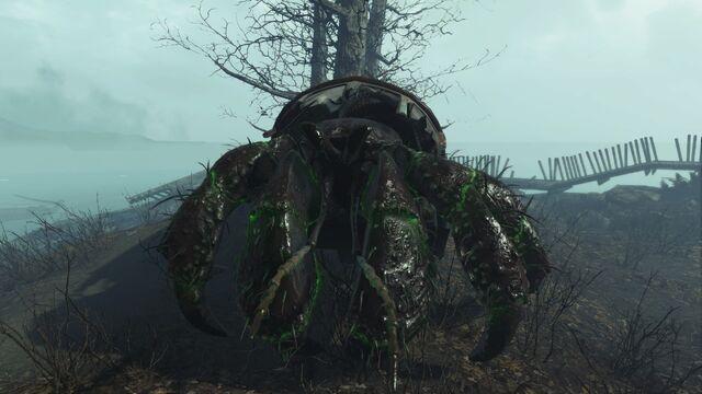 File:Glowing hermit crab.jpg