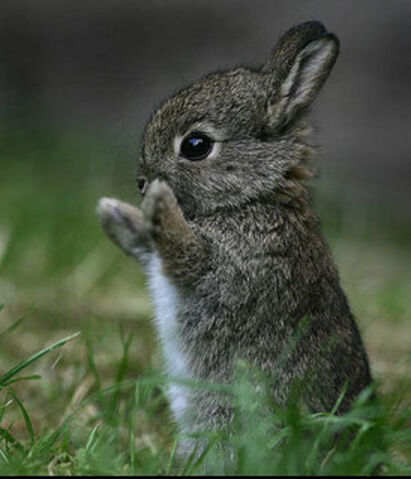 File:Bunny gift.jpg