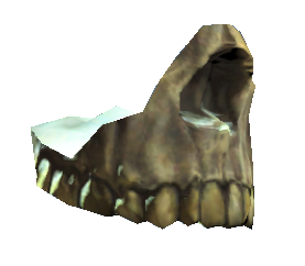File:Human jaw.png