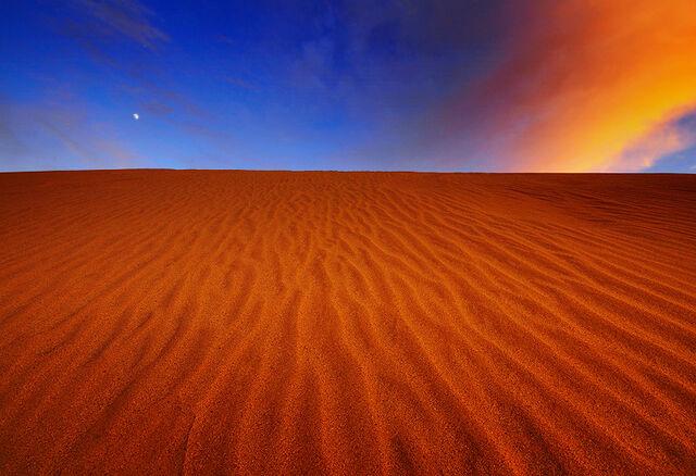 File:Desert Beauty.jpg