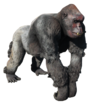 FO4NW Ghoulrilla King