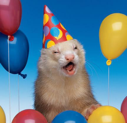 File:Party ferret.jpg
