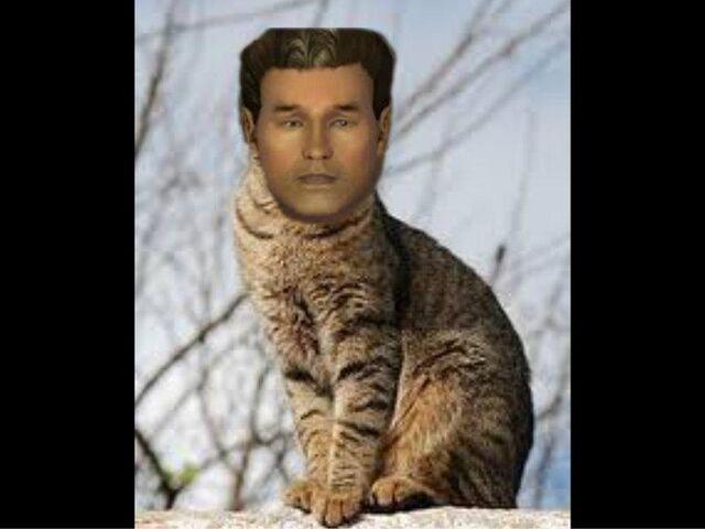 File:Ben the cat2.jpg