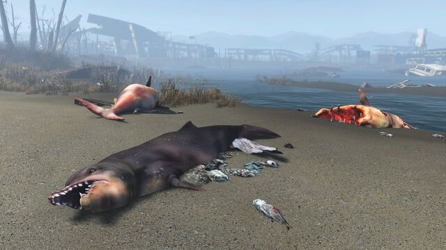 File:FO4 Sea creatures NStar wreck 1.jpg