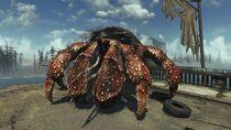 FO4-FarHarbor-Creature-HermitCrab5