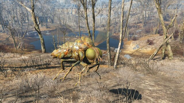File:FO4 Bloatfly horizontal attack.jpg