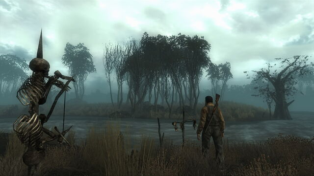 File:Point Lookout Swamp.jpg