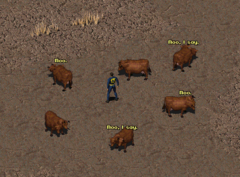 Fo1 Talking Cows