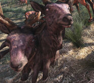 Radstag male