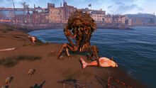 Fo4 creature Mirelurk queen portrait Revere Beach station.jpg