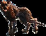 Fo4FH rabid wolf