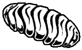 File:Icon ant egg.png