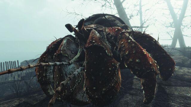 File:Savage hermit crab.jpg