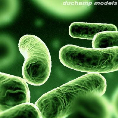 File:Bacteria5.jpg