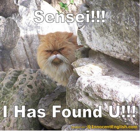 File:Cat-sensie-pic.jpg