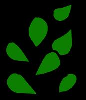Seeds Green