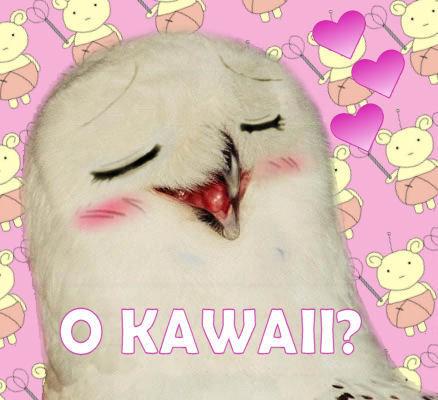 File:Okawaii.jpg