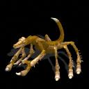Dinoscorpius