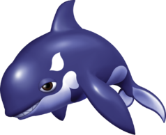 Orco the Killer Whale