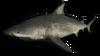 FC3 cutout bullshark