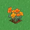 Perfect Golden Poppy-icon