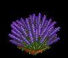 Perfect Lavender-icon
