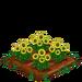 Sunflower 66