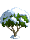 Apricot Tree7-icon