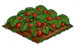 Strawberry 100