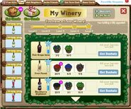 My winery