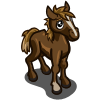 New Forest Pony Foal-icon