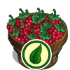 Organic Raspberry Bushel-icon