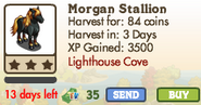 Morgan Stallion Market Info