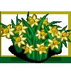 Narcissus Hood-icon