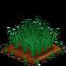 Barley 66