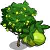 Guava Tree-icon