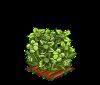Perfect Green Hellebores-icon