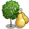 European Pear Tree-icon
