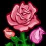 Pink Rose-icon