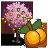 Golden Plum Tree-icon