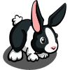 Dutch Rabbit-icon
