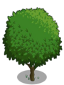 Blood Orange Tree1-icon.png