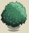 Fig Tree1-icon