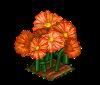 Perfect Orange Daisies-icon