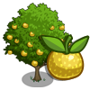 Asian Pear Tree-icon.png