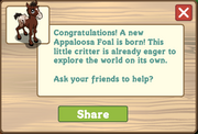 Appaloosa foal message
