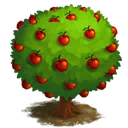 Apple Tree